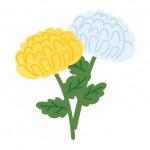 お墓参りに適した花の種類!代表的なのはズバリコレ!